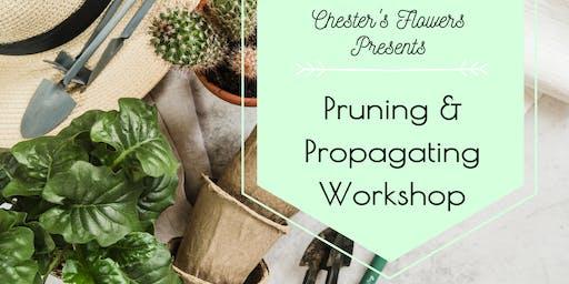 Pruning & Propagating
