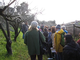 Wild greens walking tour and workshop