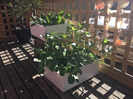 Balcony gardening: Small space, big feast!