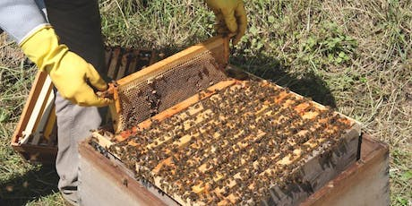 'Learn To' Workshops: An introduction to Beekeeping with Larchfield Estate Beekeeper, Ken Baird tickets