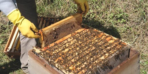 'Learn To' Workshops: An introduction to Beekeeping with Larchfield Estate Beekeeper, Ken Baird