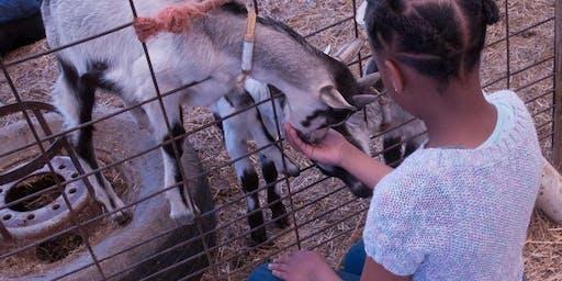 Fall Farm Festival at Celebrity Dairy