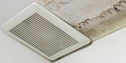 Mold and Air Sampling Reports: Real Estate Continuing Education 1 CE Credit Hour