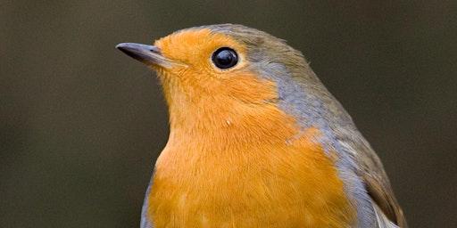Bird Feeder Making (Churchill Playing Fields)
