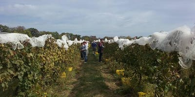 Open Harvest!  Sunday, October 20th