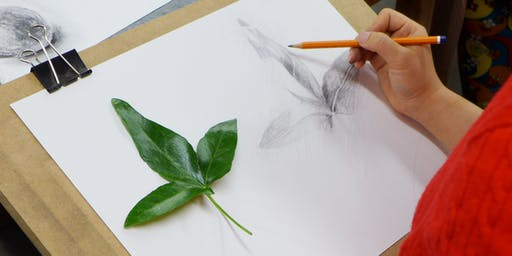 Drawing Inspiration from Nature