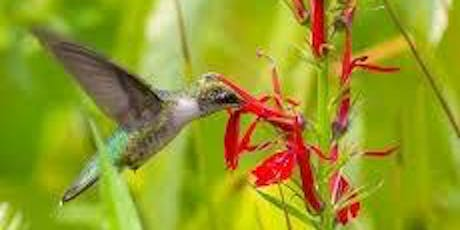 Native plant give away for birds and pollinators tickets