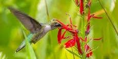 Native plant give away for birds and pollinators