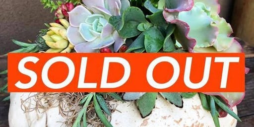 SOLD OUT Succulent Pumpkin Workshop