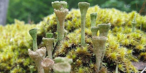 Lichen of the Pacific Northwest