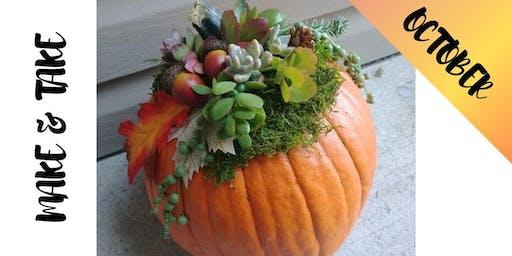Craft and Take: Pumpkin & Succulents