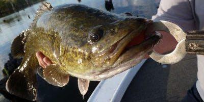 Junior Rangers Fishes and Ladders - Yarrawonga Regional Park