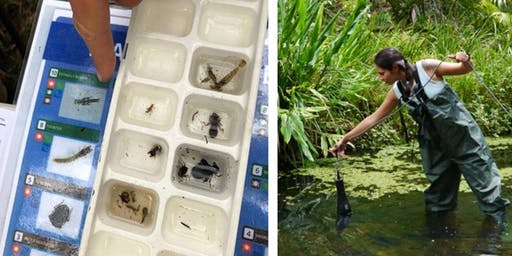 Waterbugs & Water Quality  - Coomera