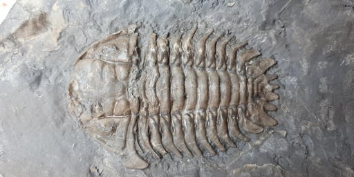 Beginner's Guide to Trilobites —WONDERS OF THE EARTH SHOW (LEARNING CENTRE)