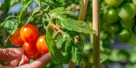 Reinventing The Wheel: Paving The Way To A Circular Food System tickets