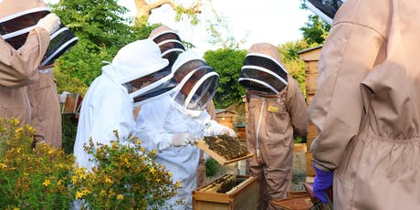 Beekeeping Taster Course / Cwrs Cyflwyniad i Gadw Gwenyn tickets