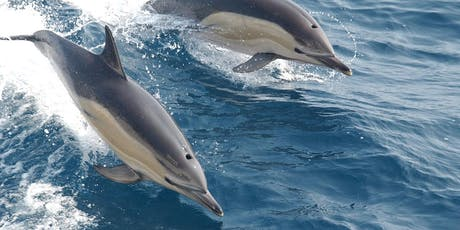 The Dolphins, Porpoises and Other Marine Mammals of Tor Bay tickets