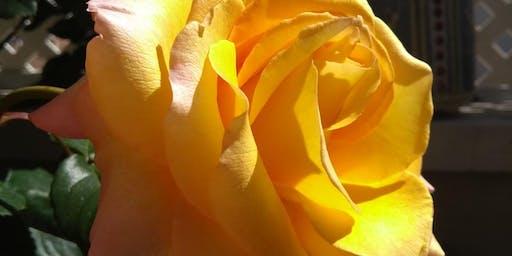Mindfulness: Práctica de la Consciencia Plena y gestión emocional