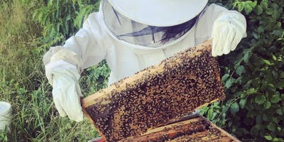 Southern MD Honeybee Workshop