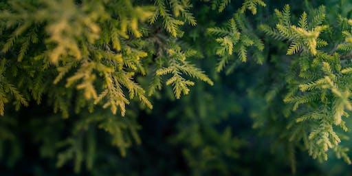 Captivating Conifers Course / Cwrs Conifferau Cyfareddol