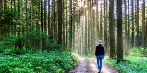 The un-hike: Forest bathing for beginners