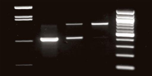 Saturday DNA! DNA Detectives