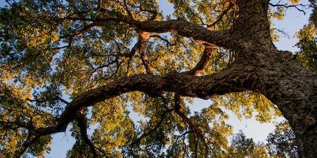 Éco randonnée Nos géants les arbres billets