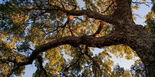Éco randonnée Nos géants les arbres