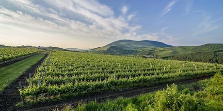 Trade & Press Only: Wines of Hungary UK hosts Blue of the Danube Tasting tickets