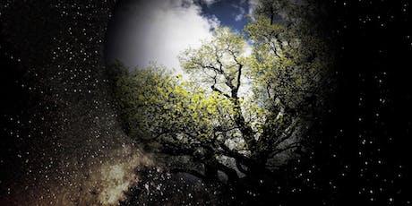 """Ernst Zürcher présente """"Les arbres et la forêt entre visible et invisible"""" billets"""