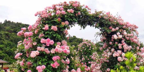 Pruning and Care of Roses, Woody Shrubs and Climbers tickets