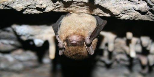 Bat Night at Gorman Heritage Farm