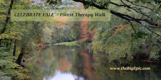 Celebrating Fall Forest Therapy Walk