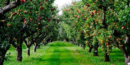 Apple Picking with Seton Hall Hillel and GMW