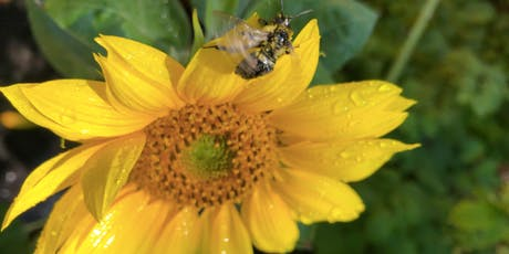 Planning a Garden for Early-Season Pollinators & Garden Party tickets