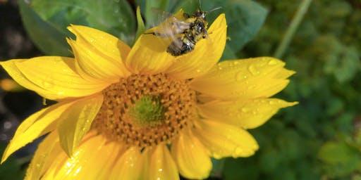 Planning a Garden for Early-Season Pollinators & Garden Party