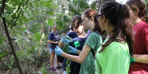 Invasive Plant Removal Workday