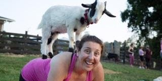 SOLD OUT Goat Yoga