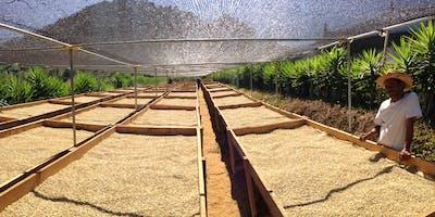 Sustentabilidad en el Café y cata basica de Cold Brew