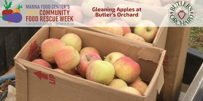 Community Food Rescue Week: Gleaning Apples at Butler's Orchard