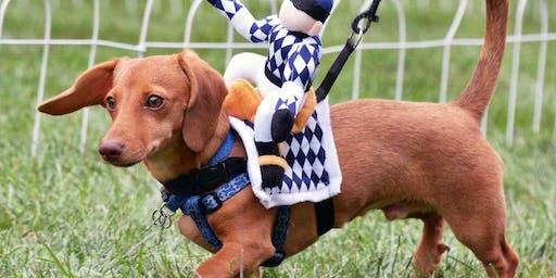 Weiner Dog Races at FMBrew Oktoberfest