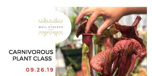 Carnivorous Plant Pot Up