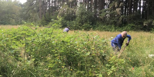 Red Salmon Creek Invasive Species Removal- 9/25