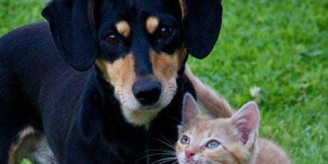 5Knine-Feline Fun Run for Lubbock Animal Shelter tickets