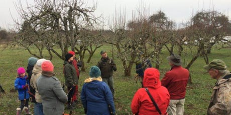 Winter pruning techniques tickets