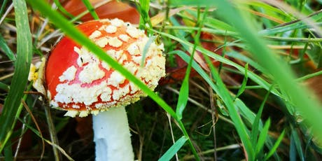 Fungi Forage - Livingston tickets