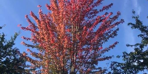 PhotoFYT Natural Mindfulness Photo Walk Autumn