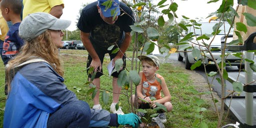 TreePhilly Yard Tree Giveaway: Fall 2019