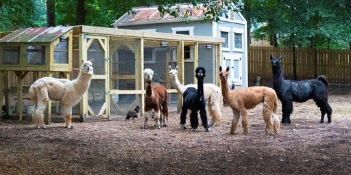 "Decatur Alpaca Cottage - ""Party like a 'Paca"" Pop Up"