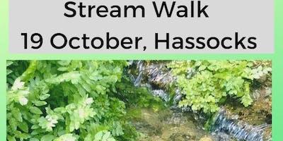 Stream Walk